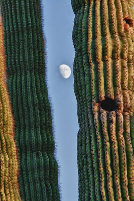 Photograph - Southwest Saguaro Cactus Close-up With Moon by James BO Insogna