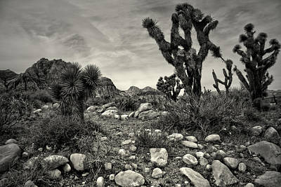 Photograph - Southwest Views by Mark  Ross