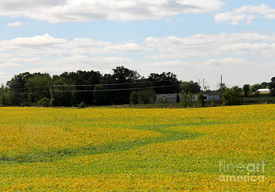 Photograph - Soy Bean Field by Pamela Walrath