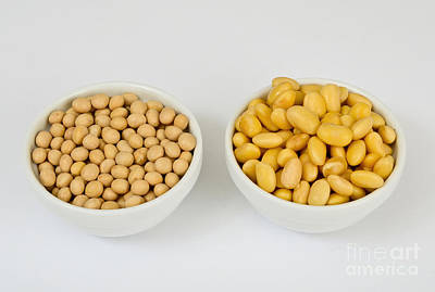 Soy Beans Art Print by Photo Researchers