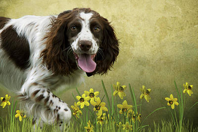 Spaniel With Daffodils Art Print by Ethiriel  Photography