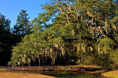 Photograph - Spanish Moss by Bill Barber