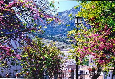 Photograph - Spanish Spring Splendor by Barbara Plattenburg