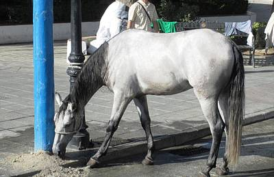 Photograph - Spanish White Horse In Mijas by John Shiron