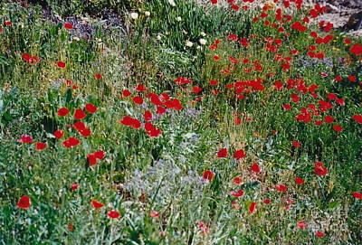 Photograph - Spanish Wildflower Field by Barbara Plattenburg