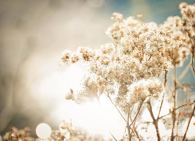 Art Print featuring the photograph Sparkly Weeds by Cheryl Baxter