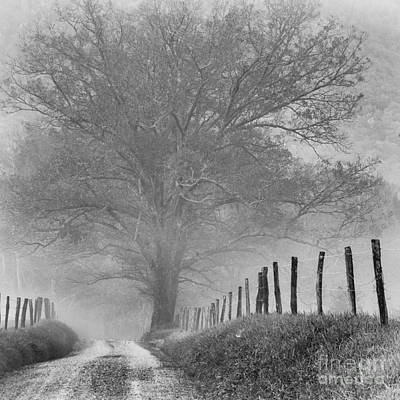 Photograph - Sparks Lane by David Waldrop