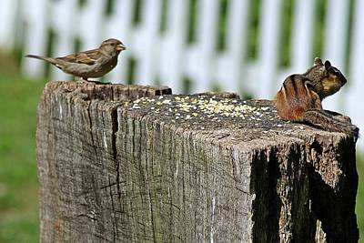 Photograph - Sparrow And Chipmunk Coexist by Joe Faherty