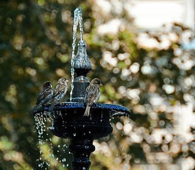 Photograph - Sparrow Bath by JAMART Photography