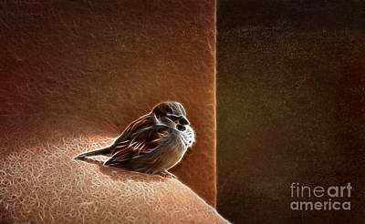 Photograph - Sparrow Fractal by Donna Greene