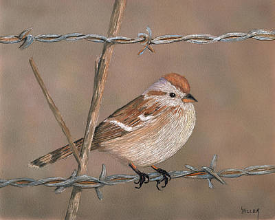 Barbed Wire Fences Painting - Sparrow by Linda Hiller