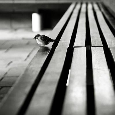 Sparrow On Bench Art Print