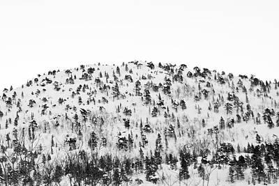 Sparse Mountain Forest In Norwegian Winter Print by Raphael Schneider