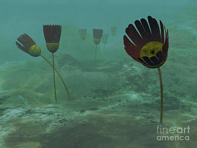Aquatic Digital Art - Species Of The Genus Dinomischus by Walter Myers