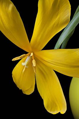 Spent Tulip Art Print by Garry Gay