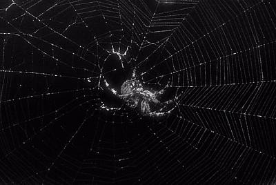 Photograph - Spider 1 by Judith Szantyr