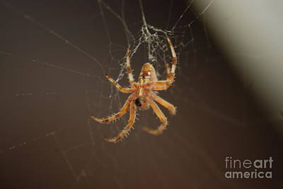 Photograph - Spider At Work by Mark McReynolds