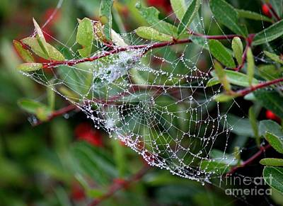 Photograph - Spider Bling 2 by Erica Hanel