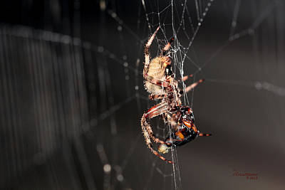 Photograph - Spider by Ericamaxine Price