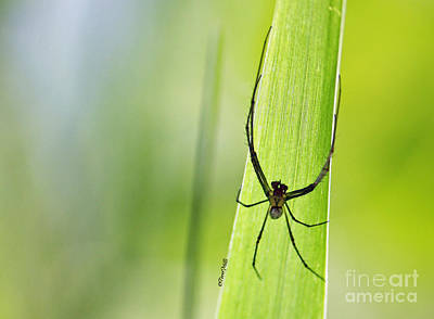 Photograph - Spider Hanging On A Blade Of Grass by Terri Mills
