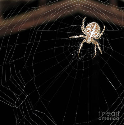 Photograph - Spider In His Web At Night. Square Format by Ausra Huntington nee Paulauskaite
