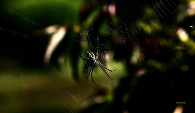 Photograph - Spider In Wait by Edward Peterson
