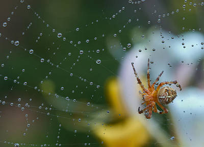 Photograph - Spider by Jean Noren