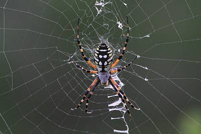 Spider Art Print by Jeanne Andrews