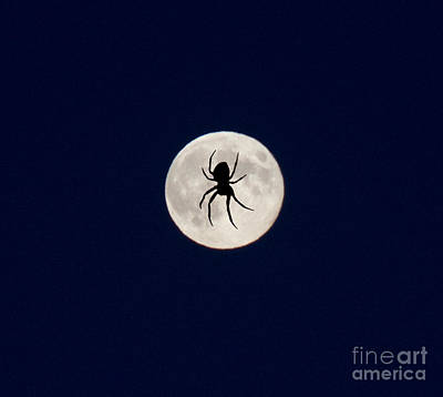 Photograph - Spider On The Moon by Donna Munro