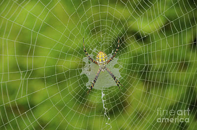 Photograph - Spider by Ronald Grogan