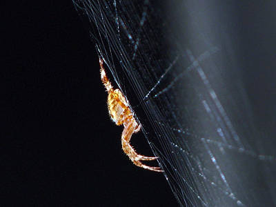 Photograph - Spider Solitaire by Chris Anderson