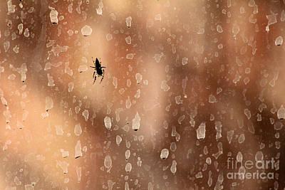 Photograph - Spider Spots by Alycia Christine