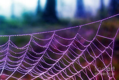 Photograph - Spider Web At Dawn by Judi Bagwell