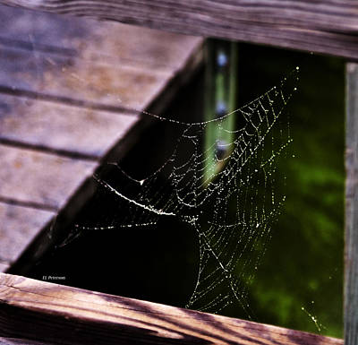 Photograph - Spider Web On A Rainy Day by Edward Peterson