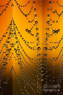 Spider Web Reflections Art Print by Odon Czintos