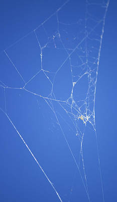 Photograph - Spider Web by Shelley Bain