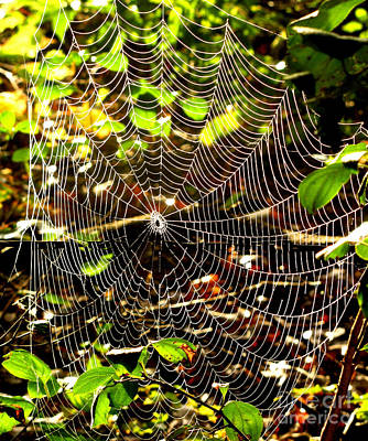 Photograph - Spider Work Of Art by Marilyn Smith