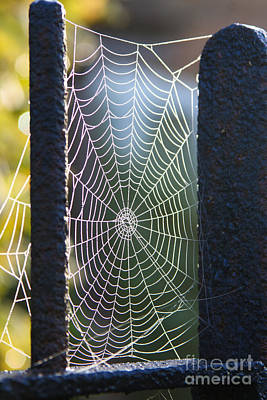Photograph - Spider's Web by Jo