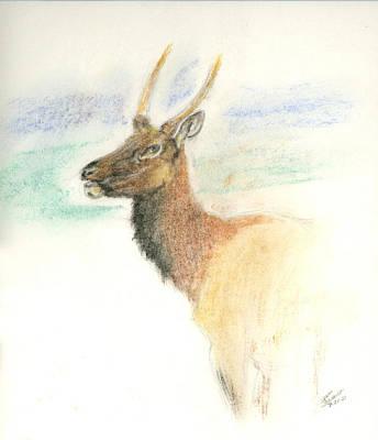 Pastel - Spike Elk by Sara Stevenson