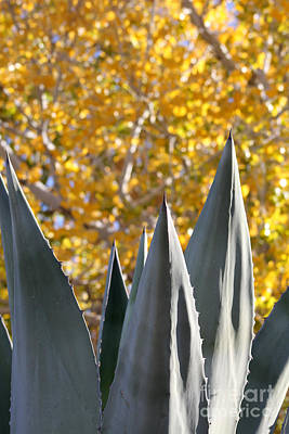 Photograph - Spikes And Leaves by Alycia Christine