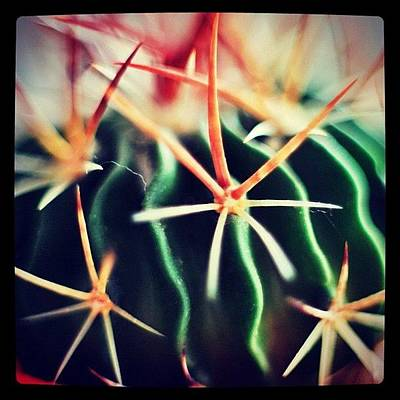 #spikes #green #plant #igaddict Print by Ritchie Garrod