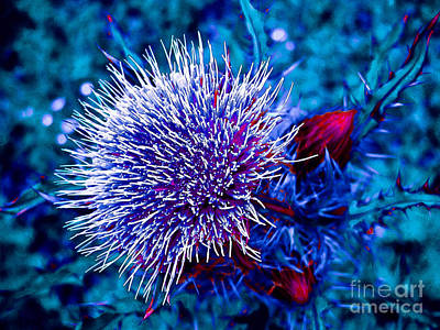 Found Round And About Photograph - Spikes by Tisha  Clinkenbeard