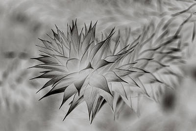 Photograph - Spikey L by Shirley Mitchell