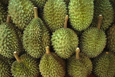 Spiny Green Durian Fruit Sold Art Print