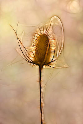 Spiny Digital Art - Spiny Plant In Abstract by Odon Czintos