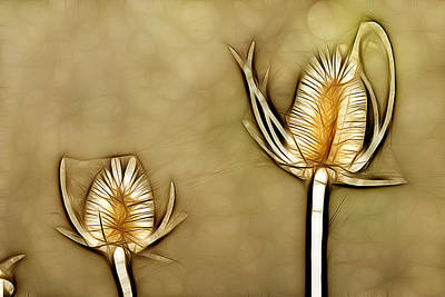 Spiny Digital Art - Spiny Plants In Abstract by Odon Czintos
