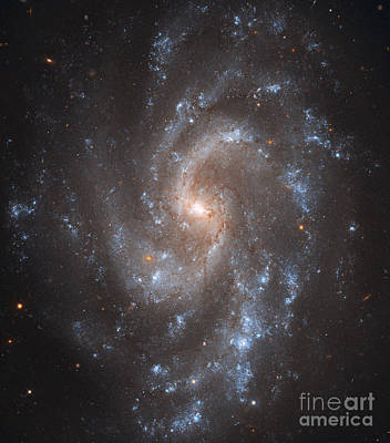 Virgo Photograph - Spiral Galaxy Ngc 5584 by Stocktrek Images