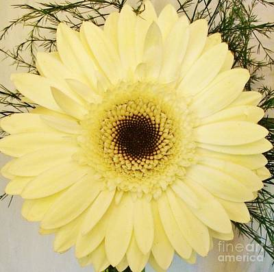 Gerber Daisy Photograph - Spiral Gerber Daisy by Marsha Heiken