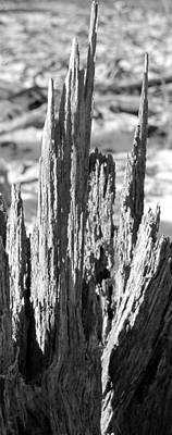 Photograph - Spires Of Wood by Douglas Pike