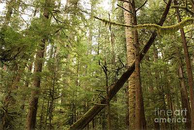 Forest Floor Photograph - Spirit Of The Pacific Northwest by Carol Groenen